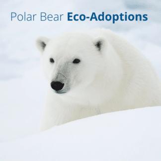Eco-Adoptions
