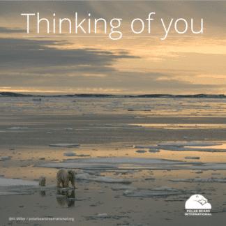 Polar-bear-mom-cub-arctic-thinking-you-ecard