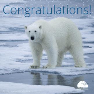 polar-bear-arctic-congratulations-ecard
