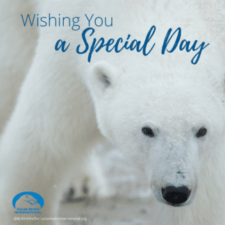 polar-bear-arctic-special-day-ecard