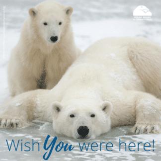 polar-bear-mom-cub-wish-ecard